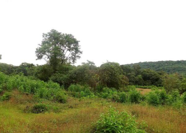 Plot in Siolim